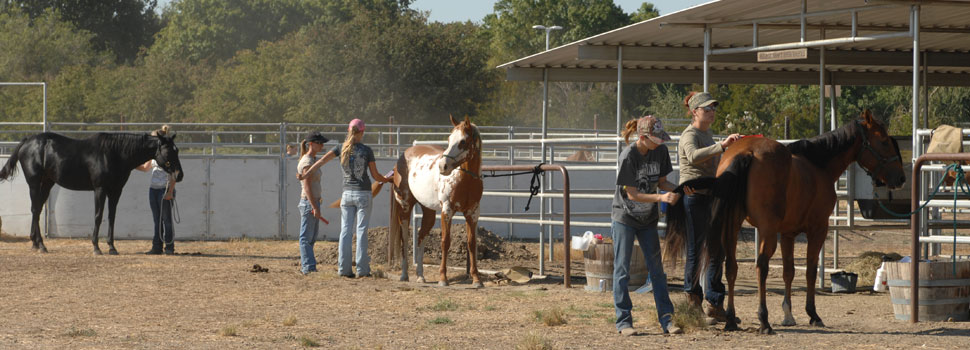 Decorative Header Image